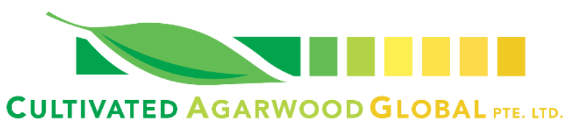 Cultivated Agarwood